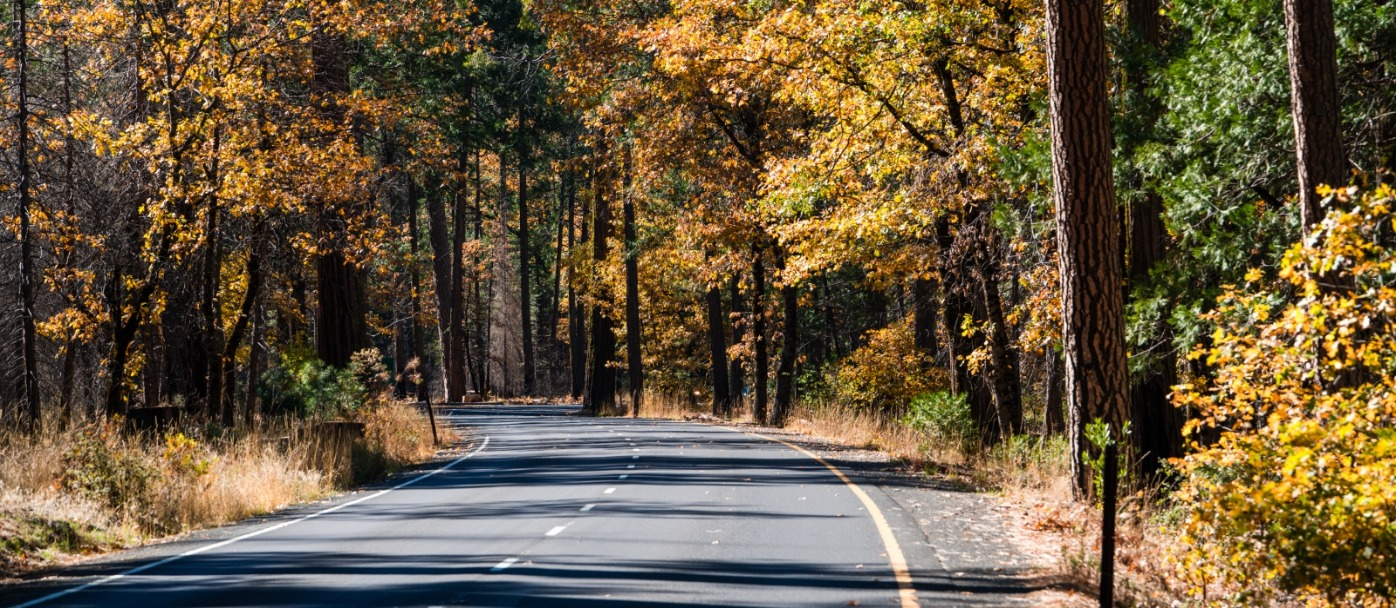 Fall foliage highlights the roads in Yosemite Valley