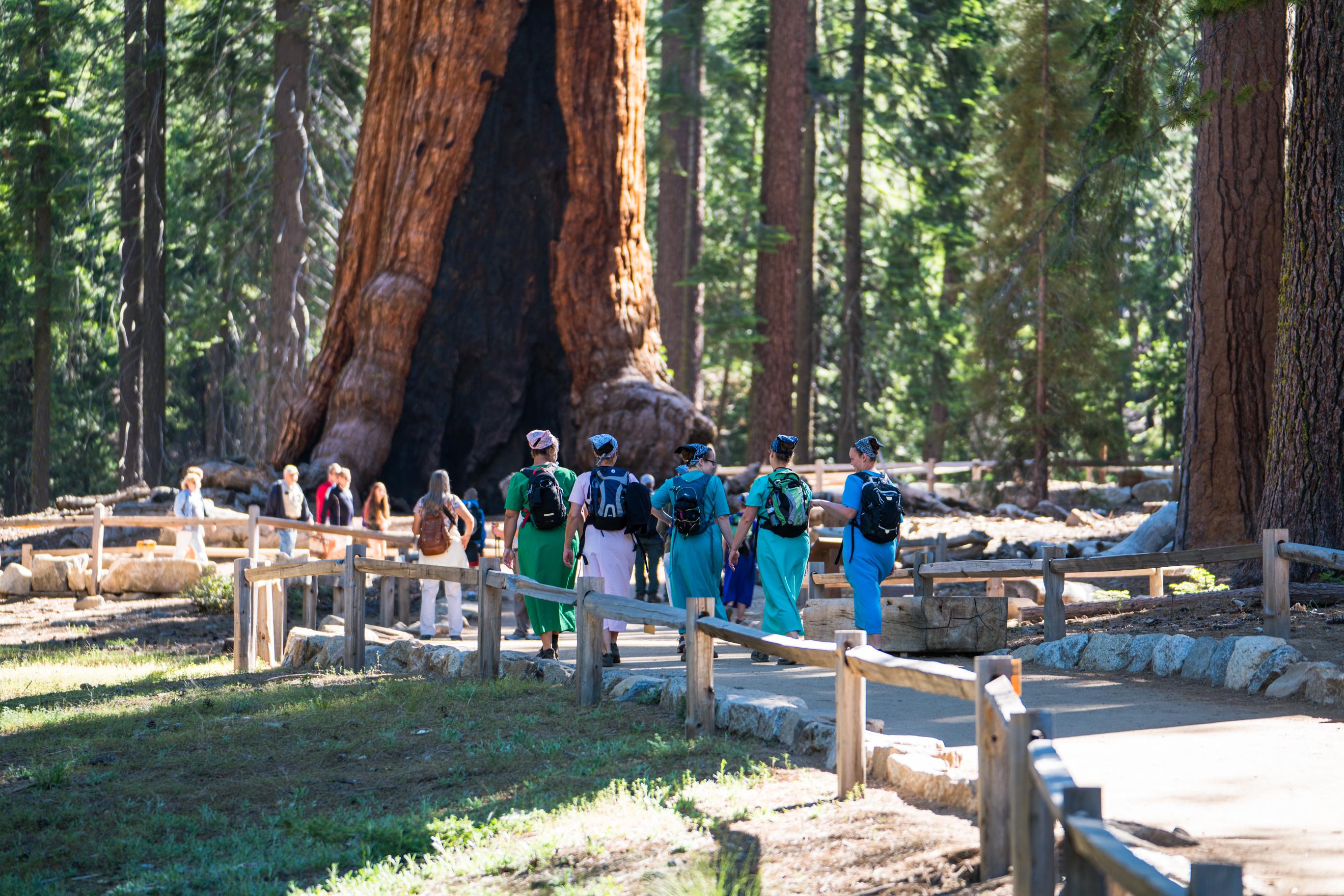 Mariposa Grove, Giant Sequoias, Hiking, Yosemite National Park, Grizzly Giant