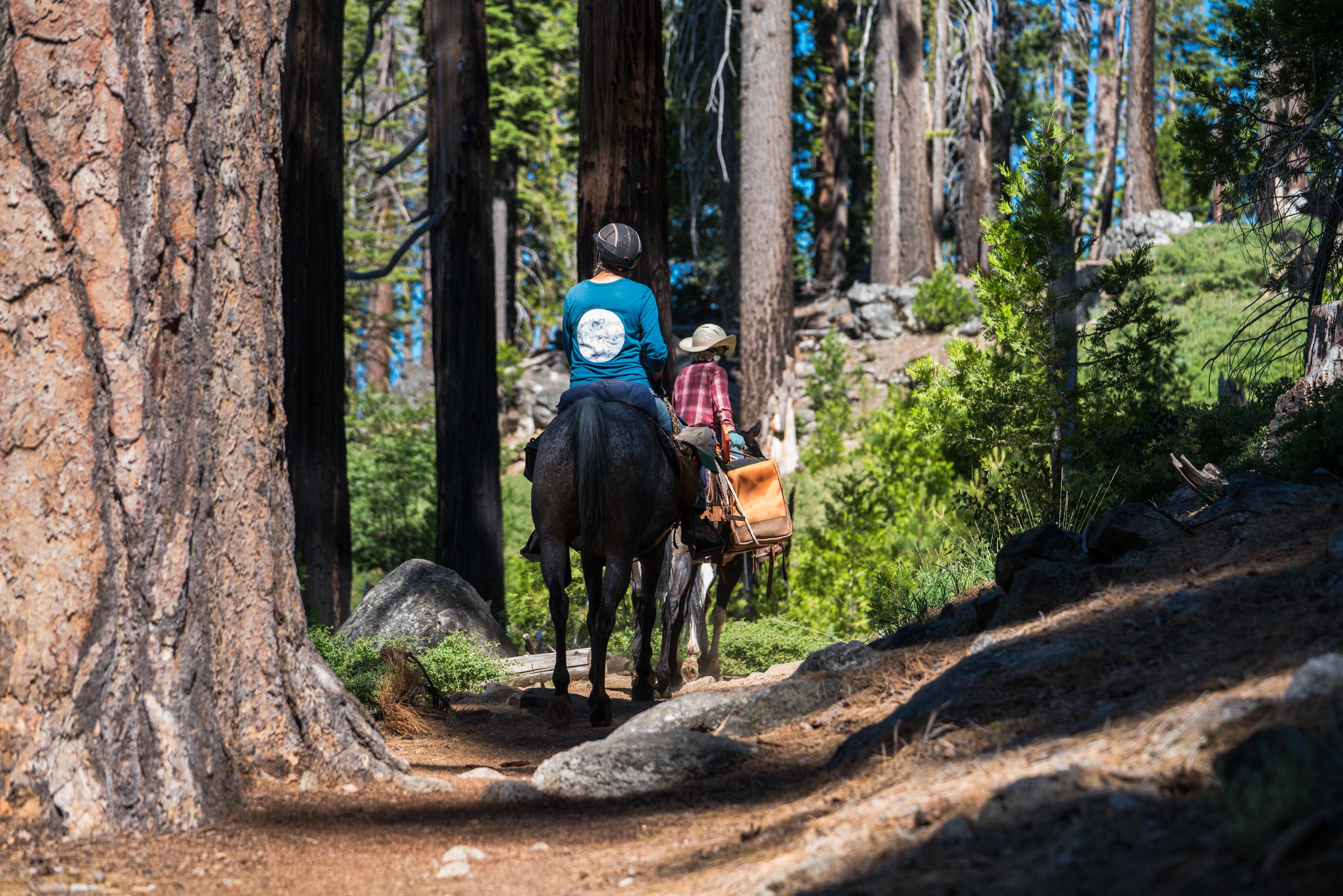 Mariposa Grove, Giant Sequoias, Hiking, Yosemite National Park, Horse Riding, Trail Riding