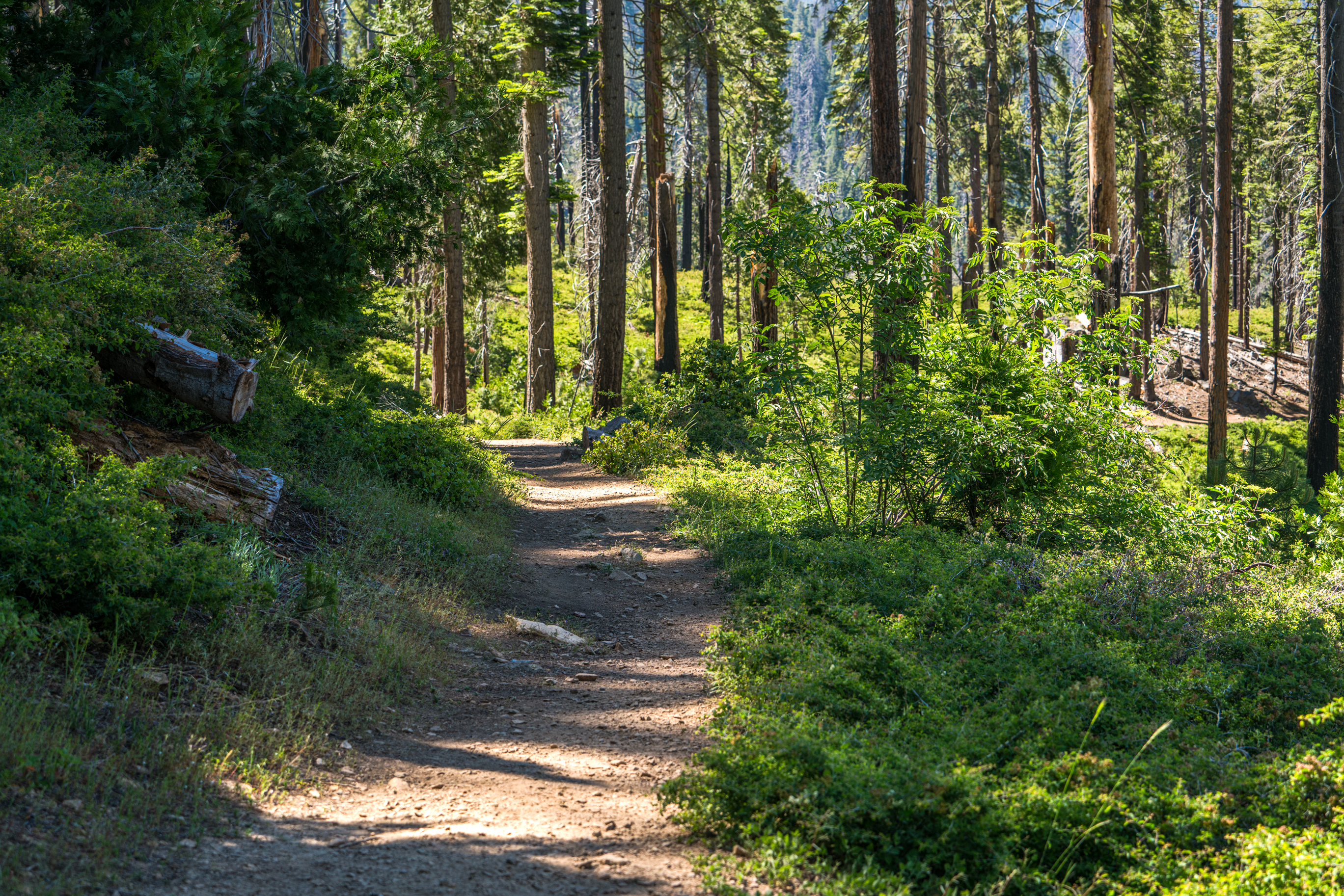 Mariposa Grove, Giant Sequoias, Hiking, Yosemite National Park, Trail
