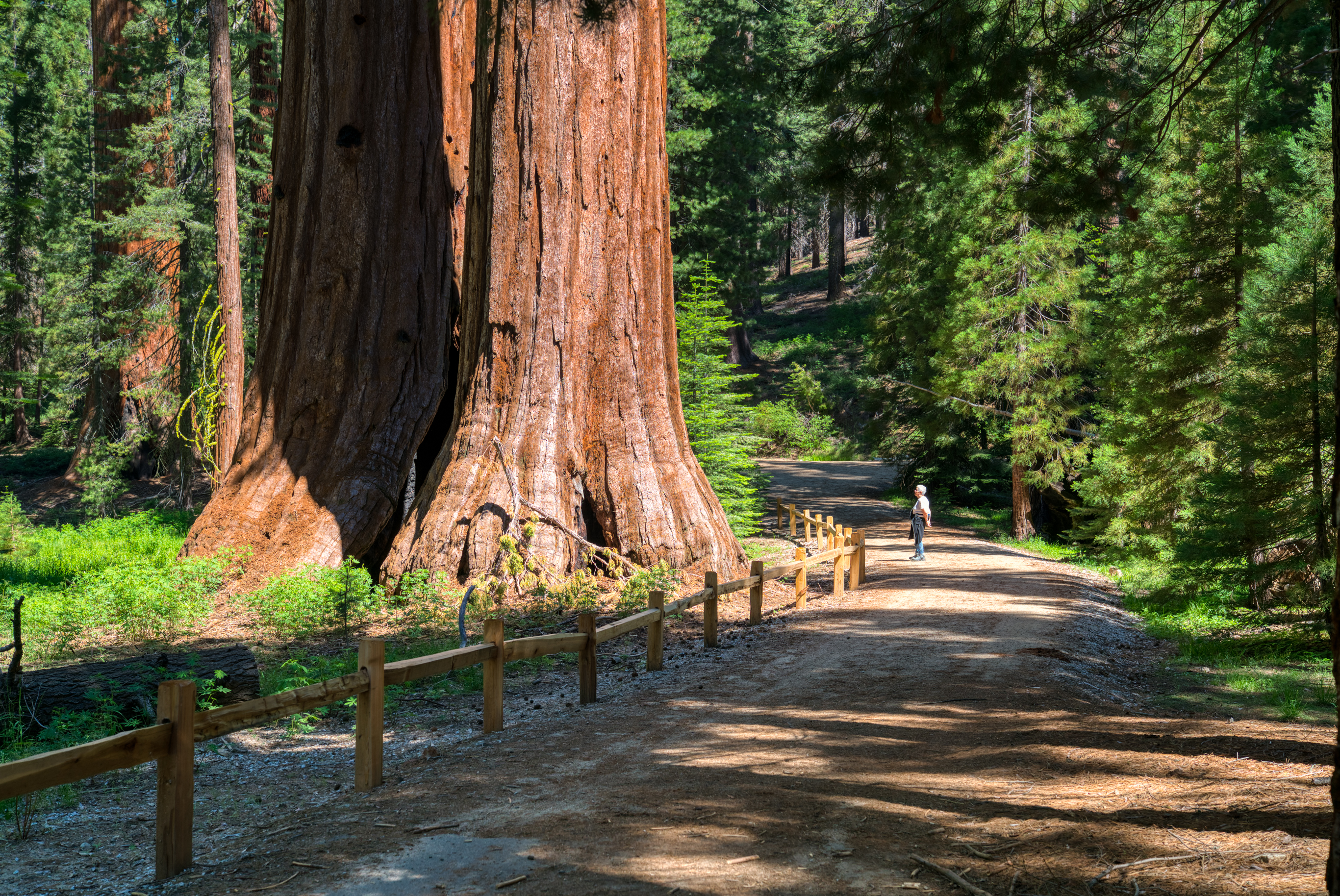 Mariposa Grove, Giant Sequoias, Hiking, Yosemite National Park