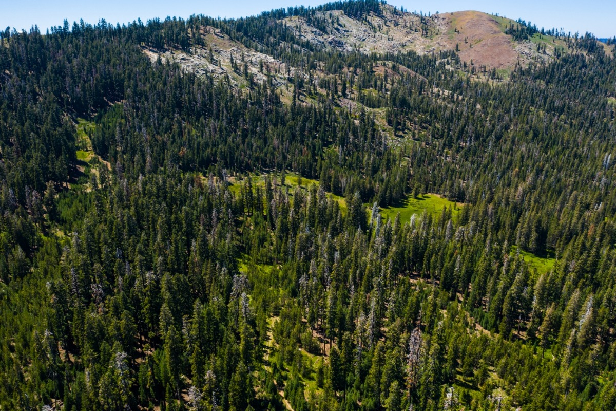 Drone, aerial, mountain, meadow, Sierra National Forest, Sierra Nevada, forest