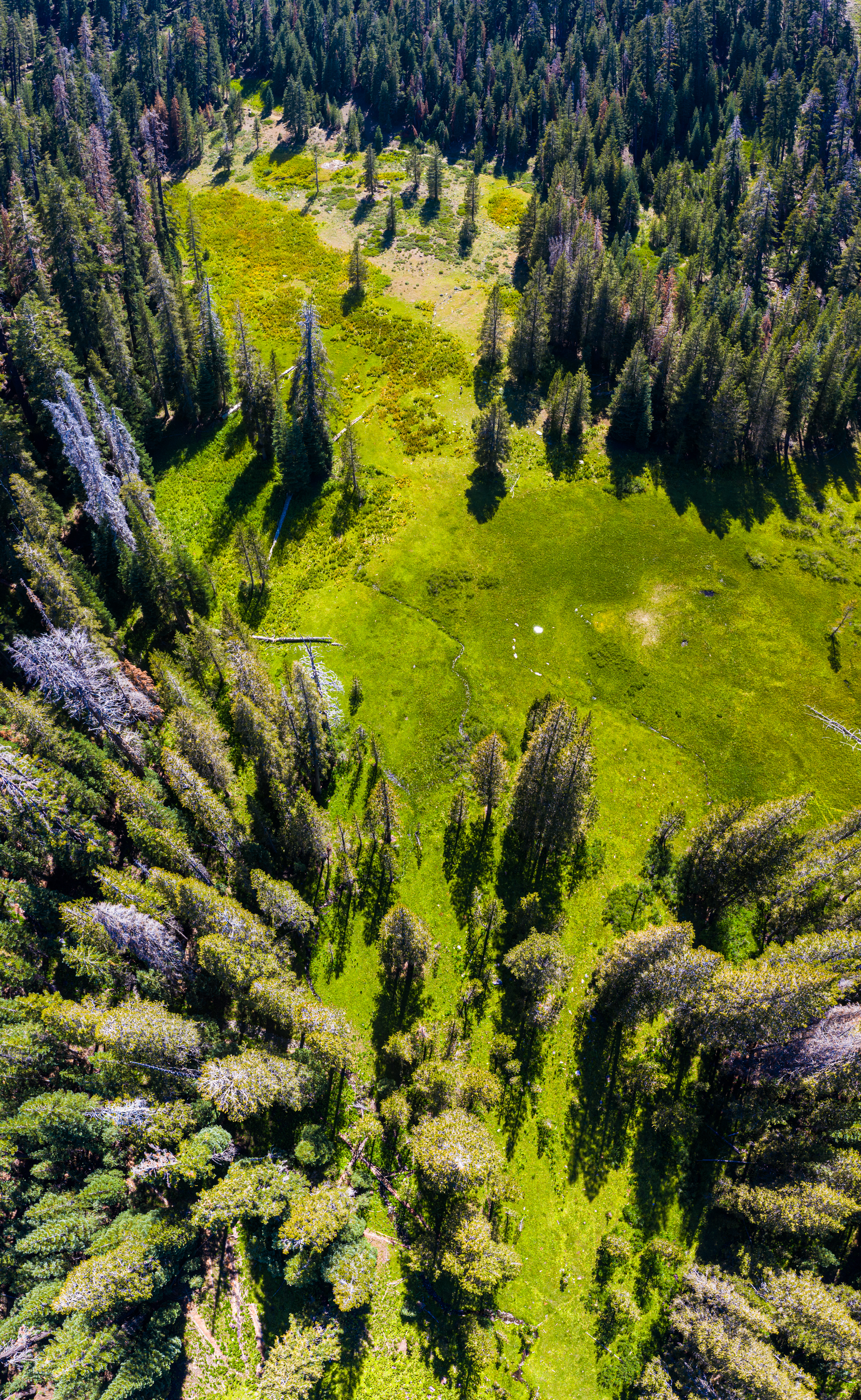 meadow, aerial, drone, forest, Sierra National Forest, Sierra Nevada, pine trees
