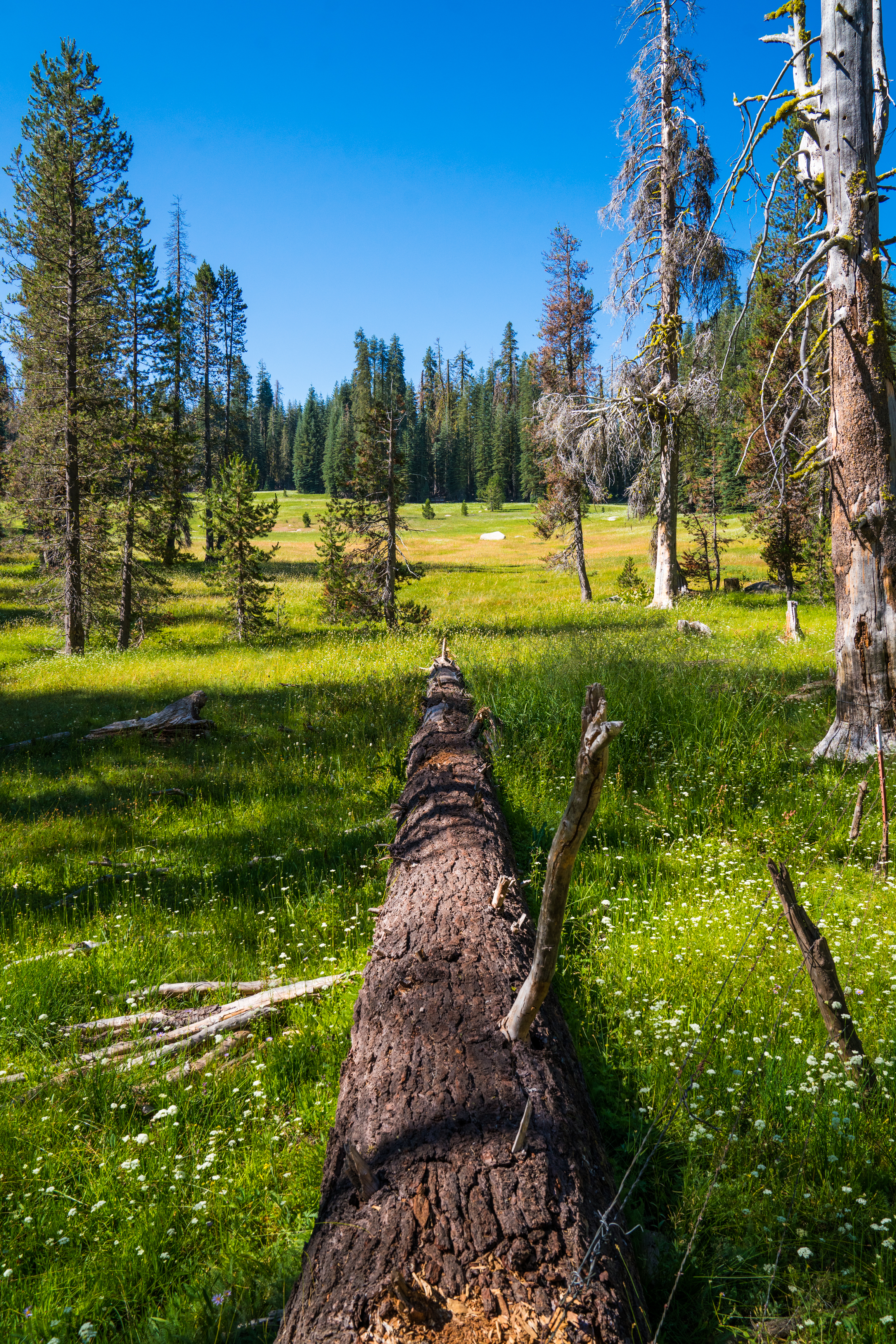 meadow, highsierra, sierra nevada, madera county, summer, wildflowers, forest, sierra national forest, hiking