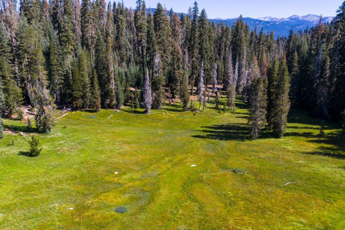 meadows, high sierra, sierra nevada, madera county, summer, wildflowers, forest, hiking