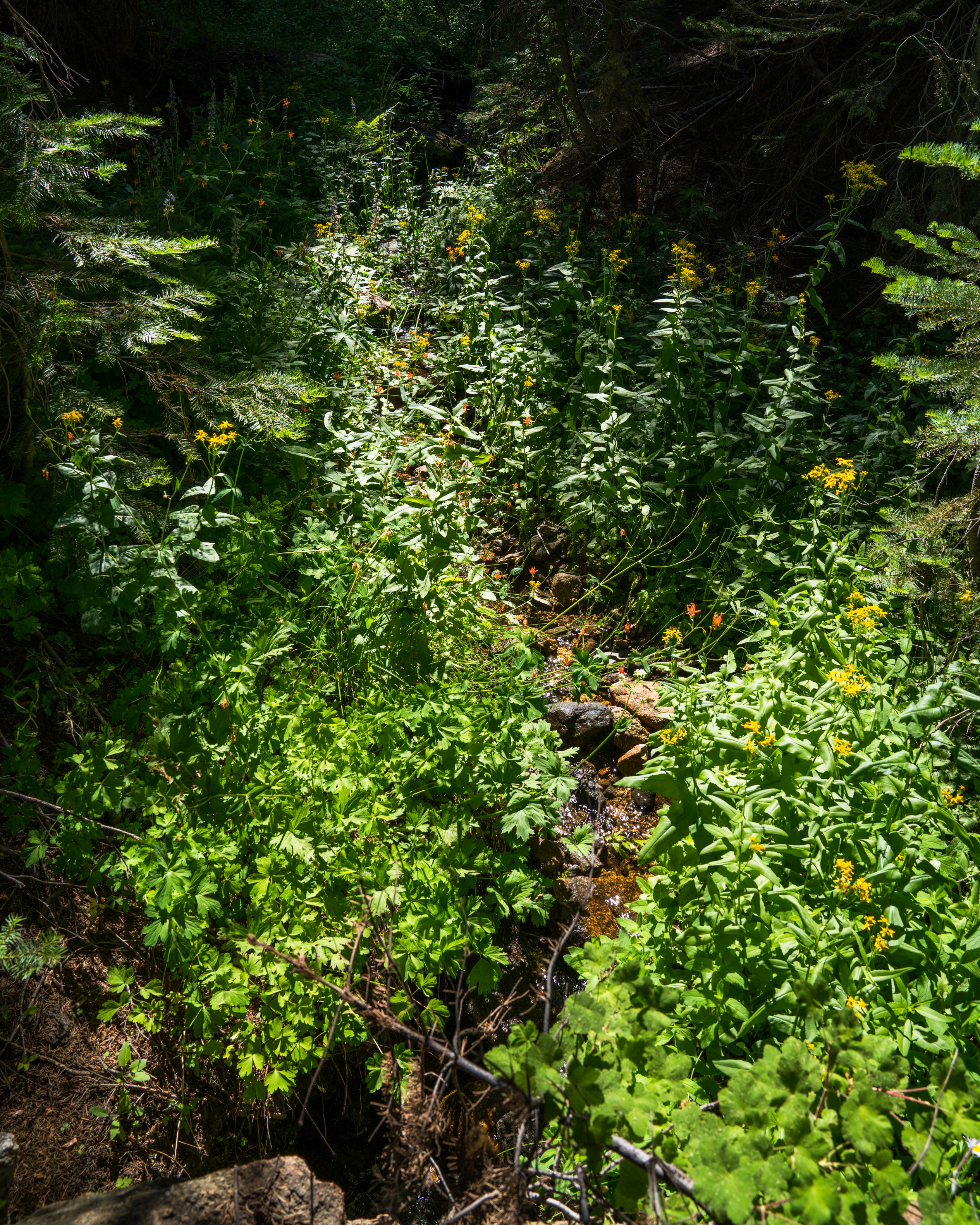 stream, wildflowers, Sierra National Forest,