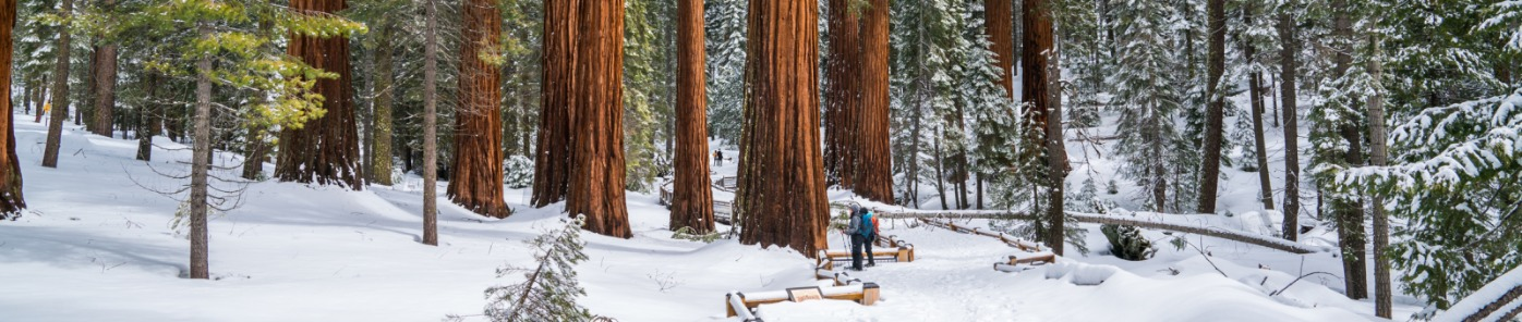 Mariposa Grove; snowshoeing in Yosemite; snowshoeing in Mariposa Grove of Giant Sequoias; Giant Sequoias