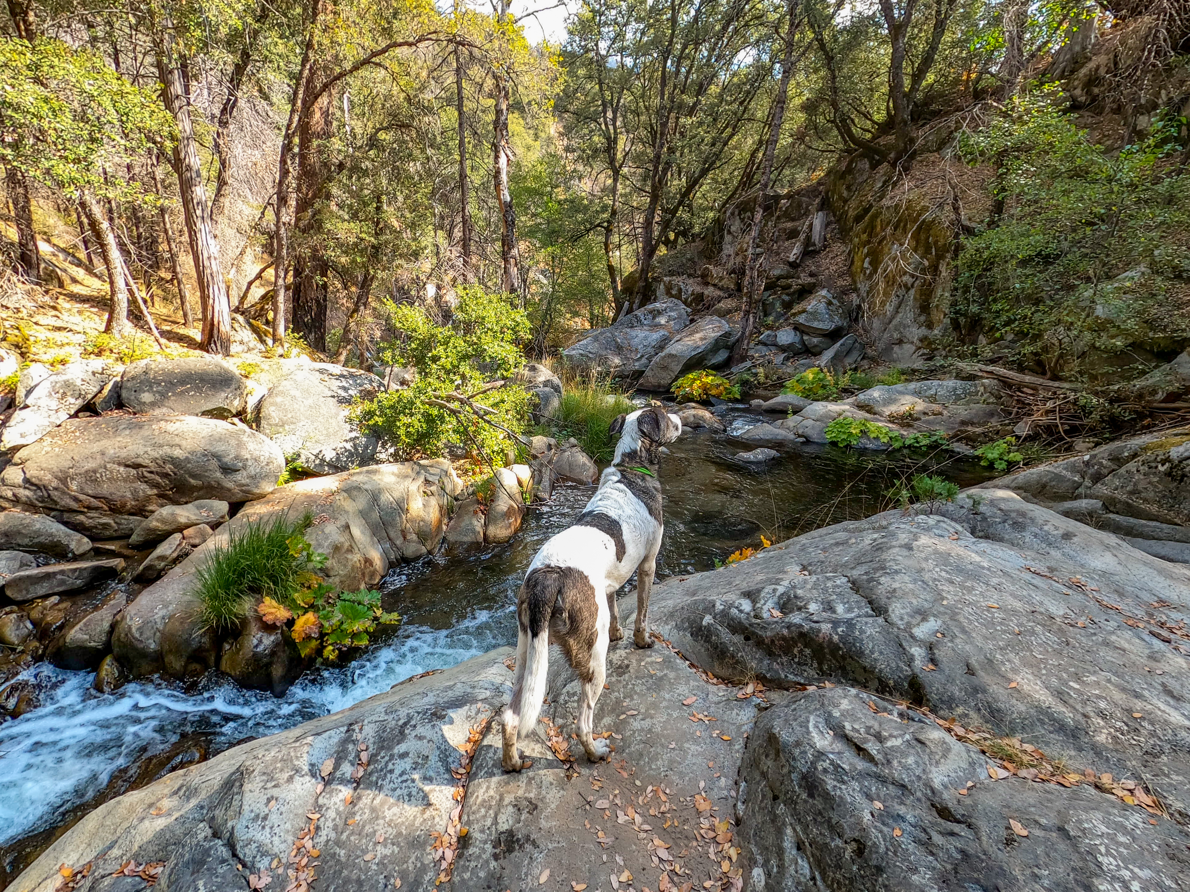 Explore the dog friendly Lewis Creek Trail.  Photo by Breeze Turner.