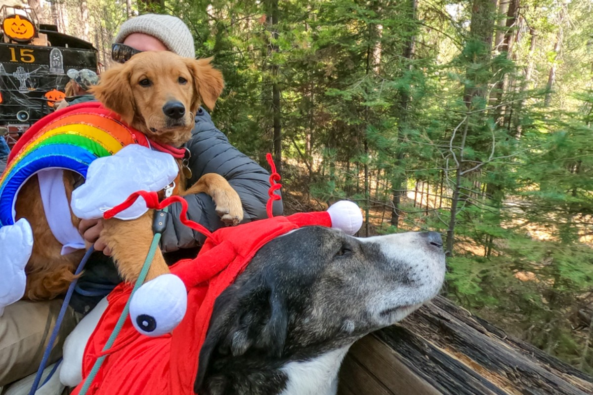 Dogs on the Yosemite Mountain Sugar Pine Railroad by Breeze Turner