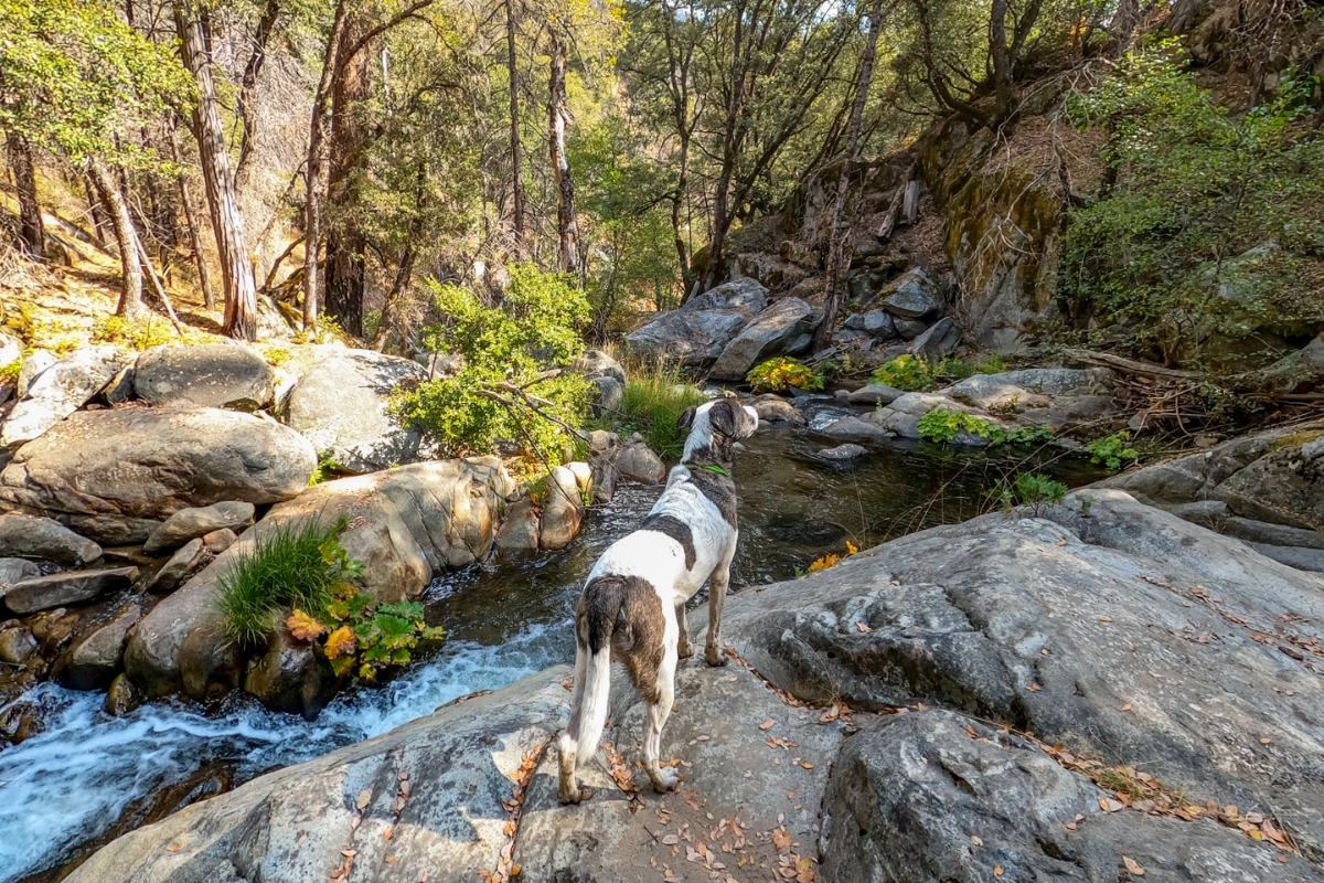 You can explore the Lewis Creek Recreational Trail with your dogs