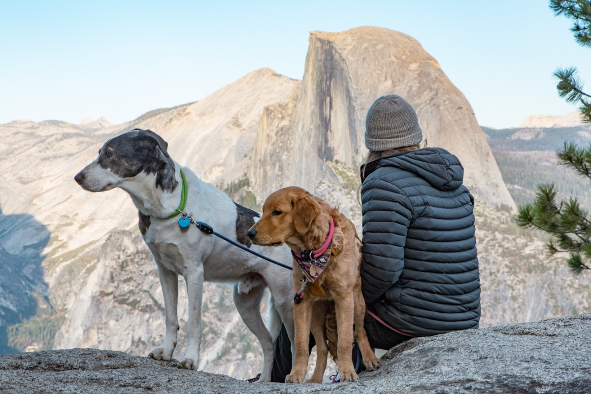 Dogs visiting Yosemite's Glacier Point