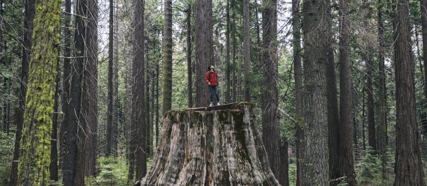 Nelder Grove of Giant Sequoias credit Visit California