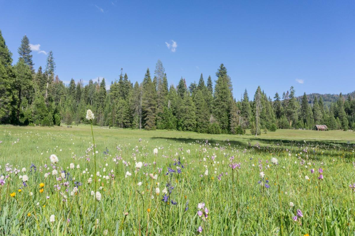 Beasore Meadow