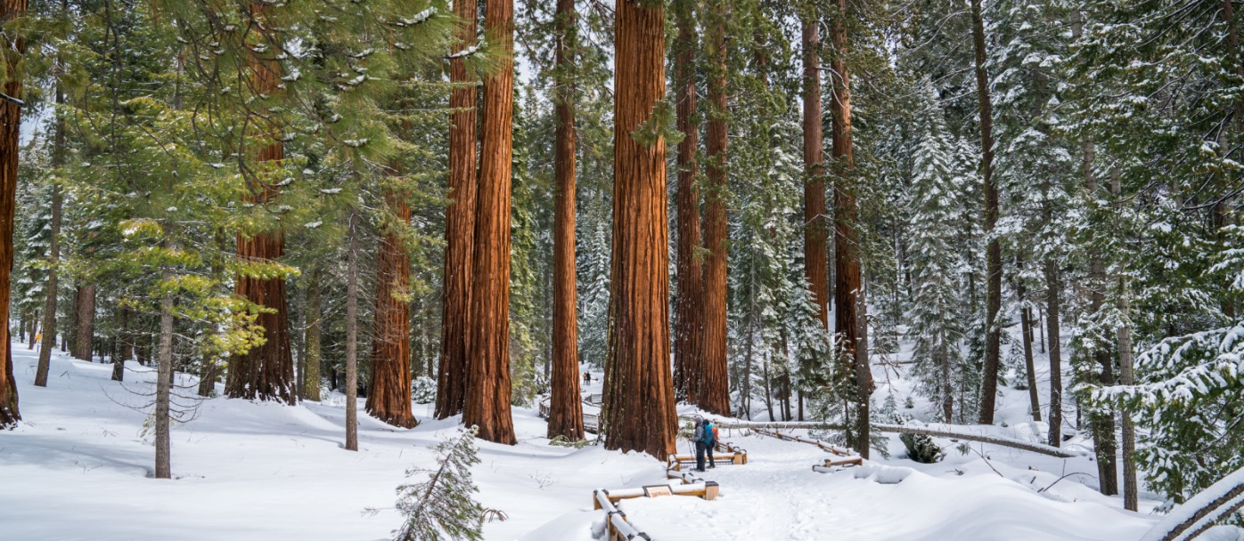 Mariposa Grove Winter Yosemite