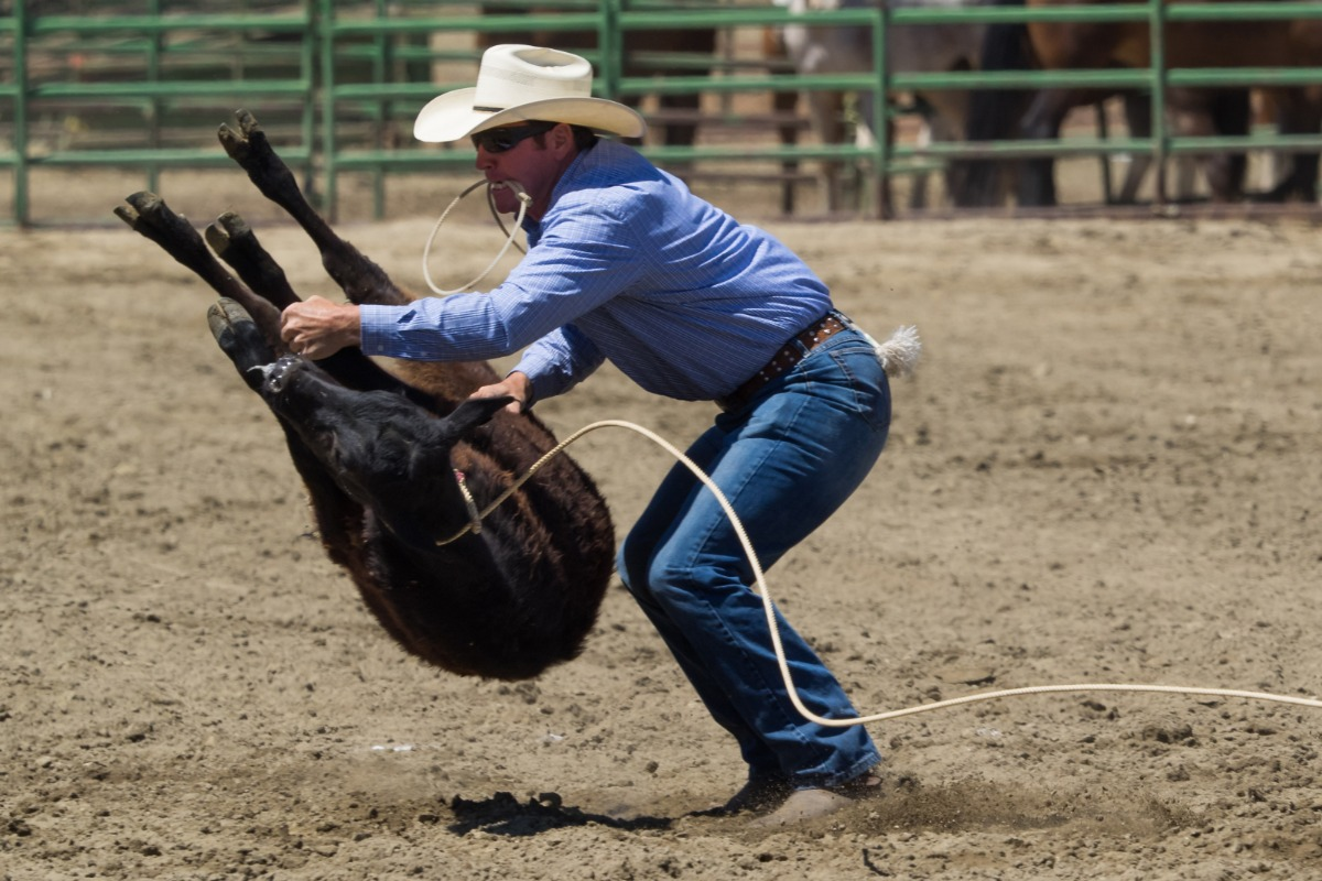 Calf Roping at the Coarsegold Rodeo, Western, Cowboy