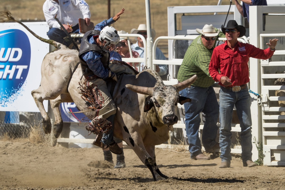 Bull Riding at the Coarsegold Rodeo, Western, Cowboy