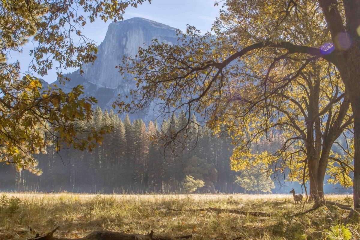Backlit Oaks in Yosemite Valley