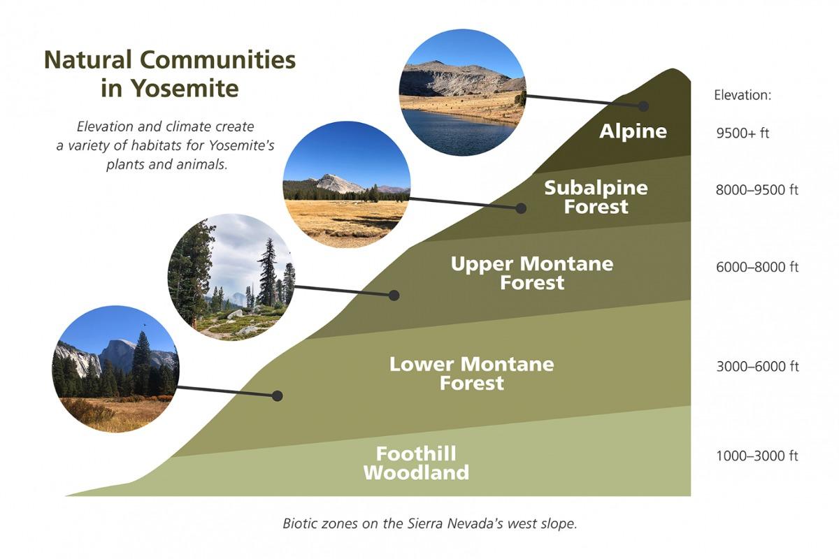 Vegetation Zones in Yosemite