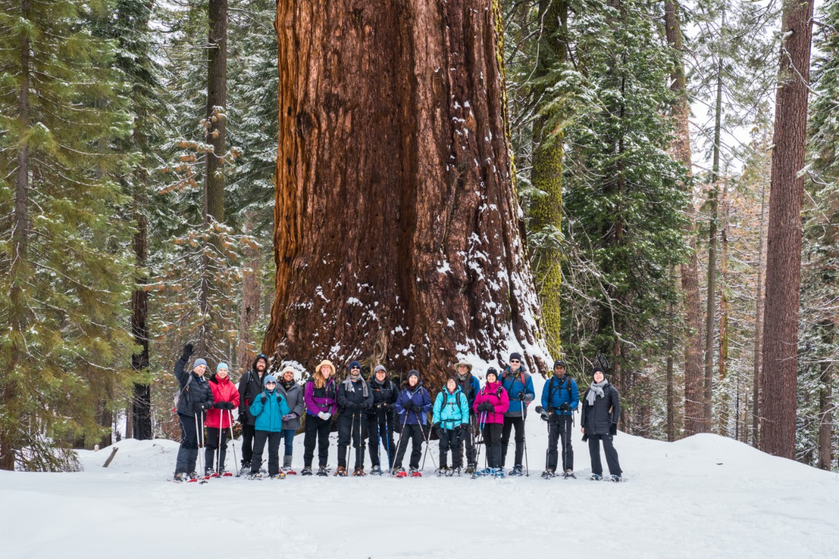 Group of snowshoers in front of the Grizzly Giant in Yosemite National Park's Mariposa Grove of Giant Sequoias
