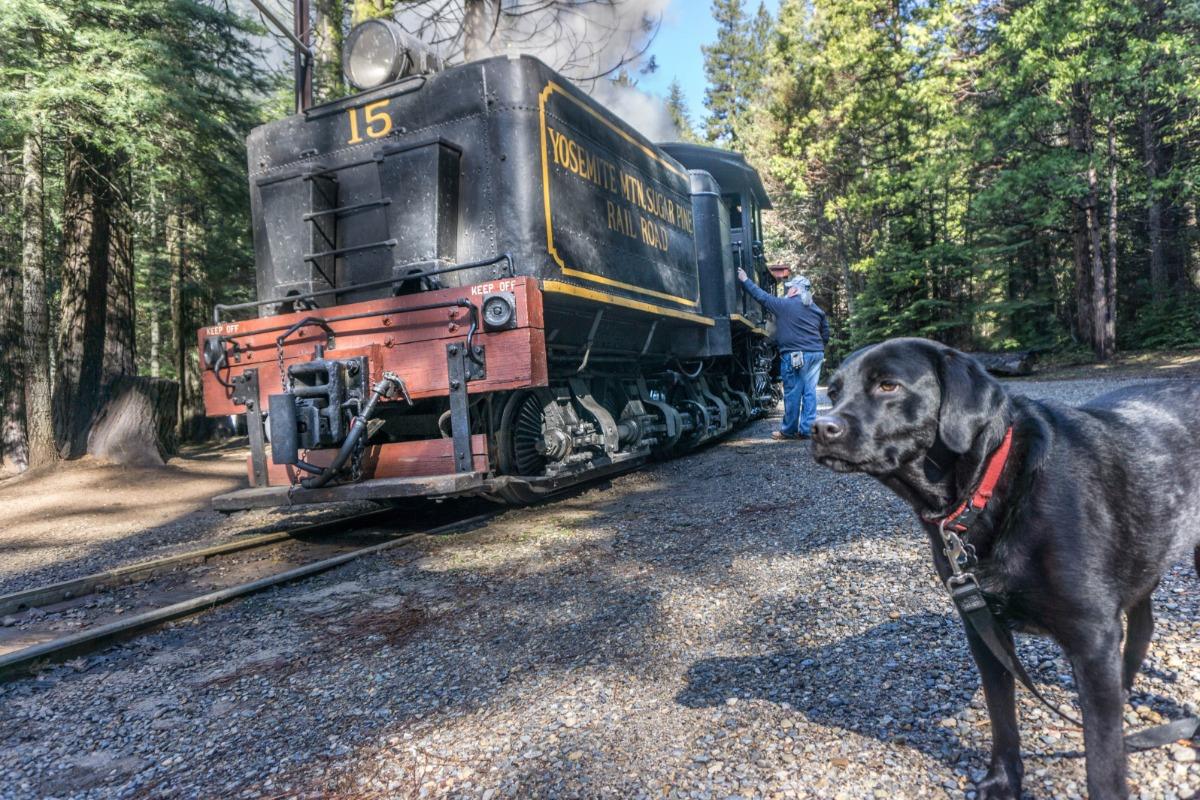 Kona the dog rides the Yosemite Mountain Sugar Pine Railroad's Logger