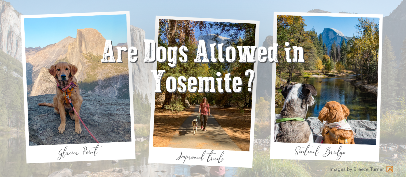 Article Header - Are Dogs Allowed in Yosemite?