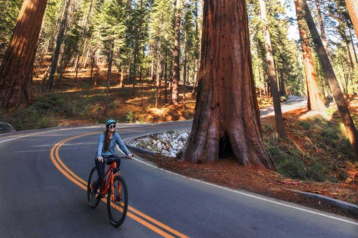 Biking to Mariposa Grove with Pedal Forward