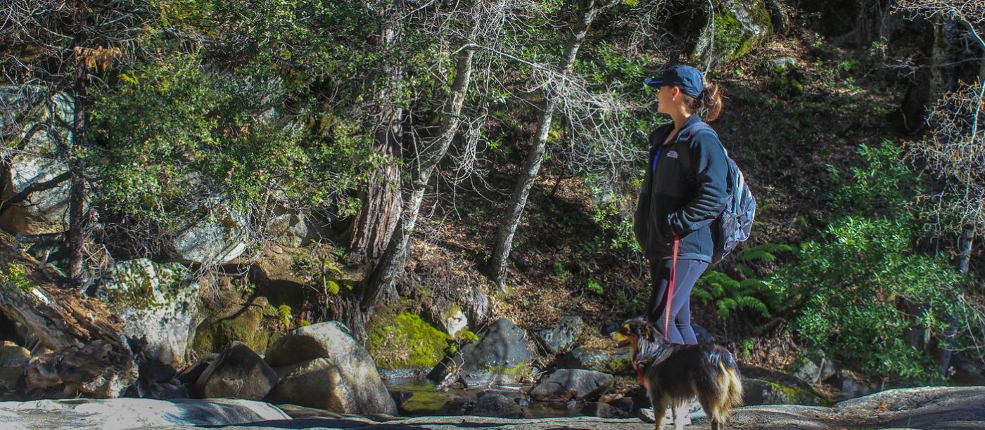 Pet Friendly Attractions & Lodging Near Bass Lake & Yosemite
