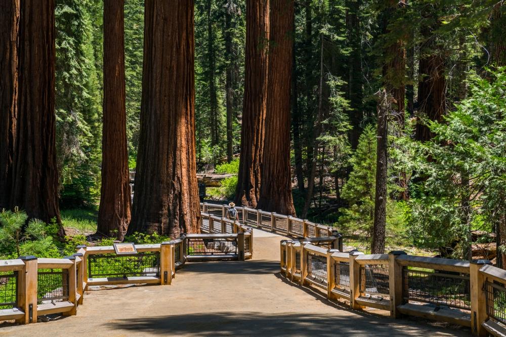 Mariposa Grove Of Giant Sequoias Yosemitethisyear Com